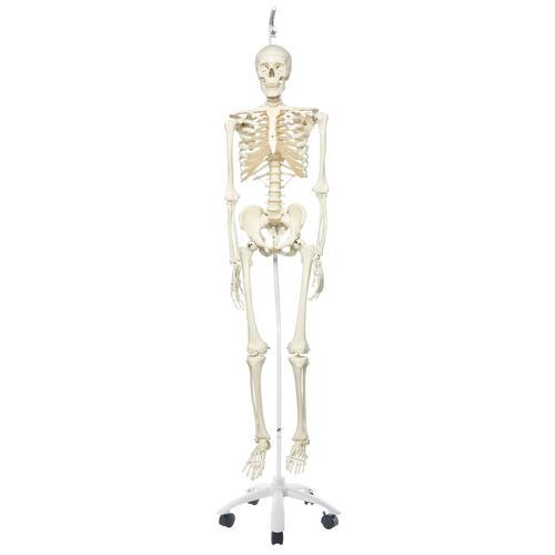 Skeleton Model- Stan - Hanging Stand