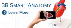 3b smart anatomy_13